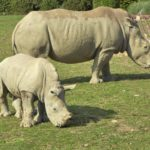 Tips for visiting Cotswold Wildlife Park and Gardens