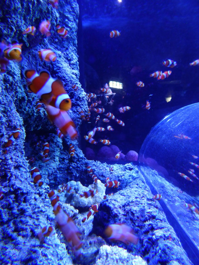 National-sealife-birmingham