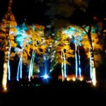 Enchanted Christmas at Westonbirt Arboretum