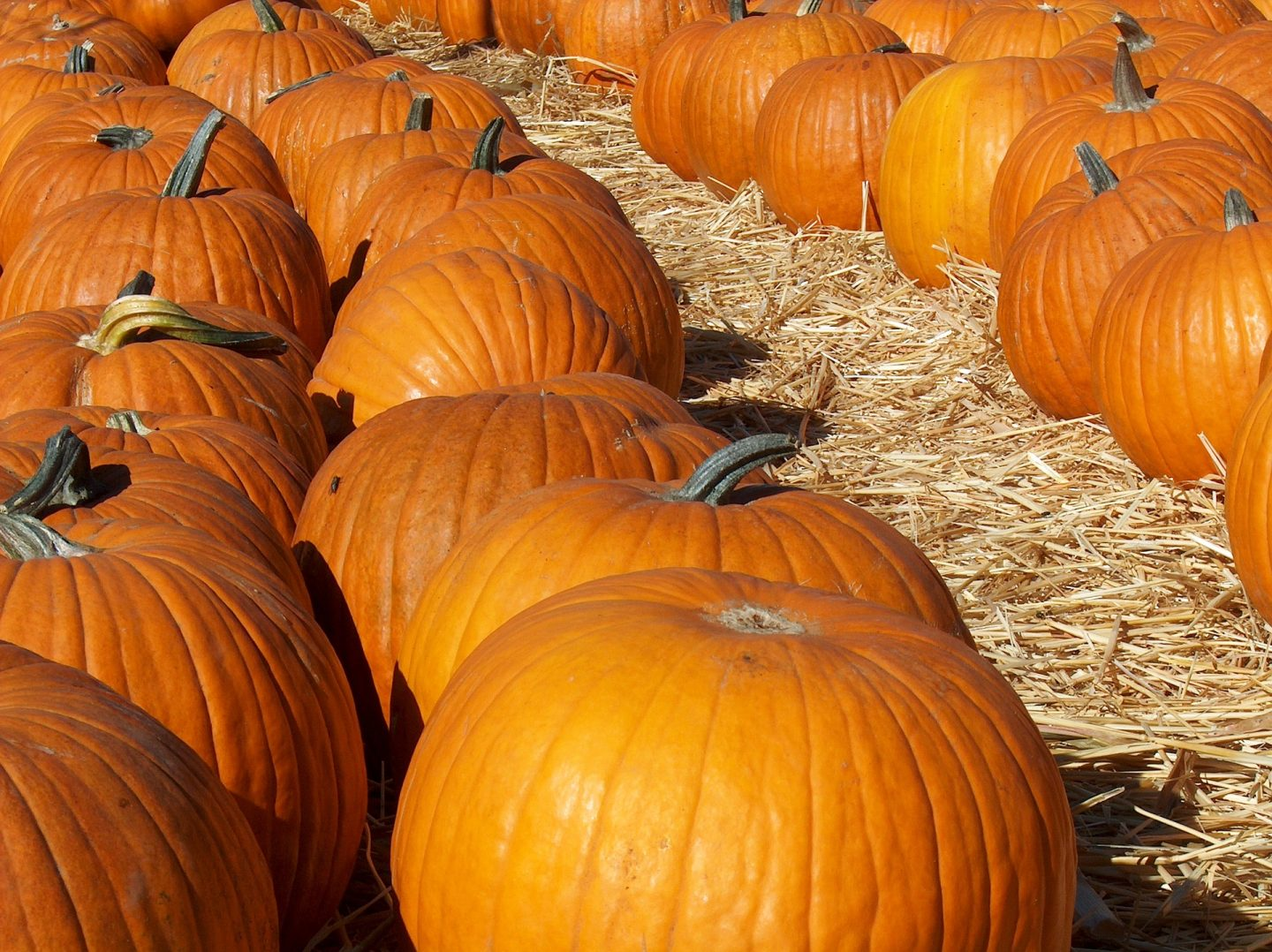 Pumpkins - Autumn outdoor family adventures