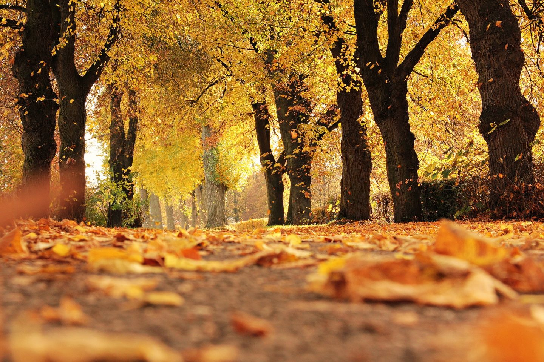 Walk - Autumn outdoor family adventures