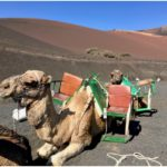 15 fun things to do in Lanzarote with kids