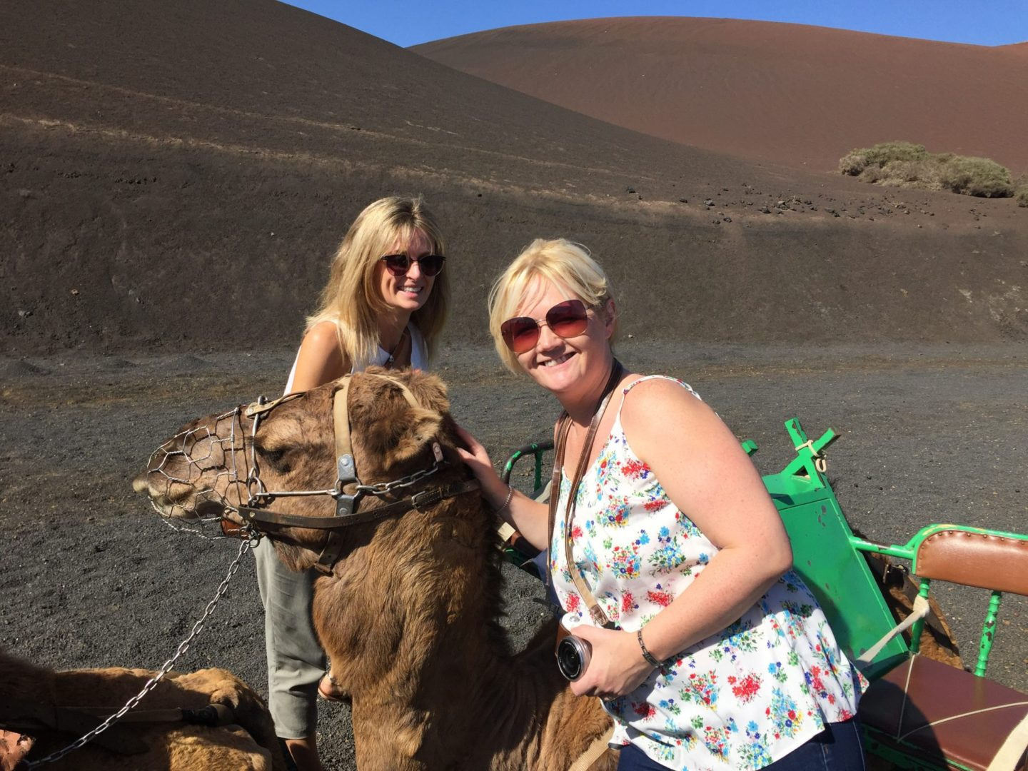 What to do in Lanzarote with kids - camels