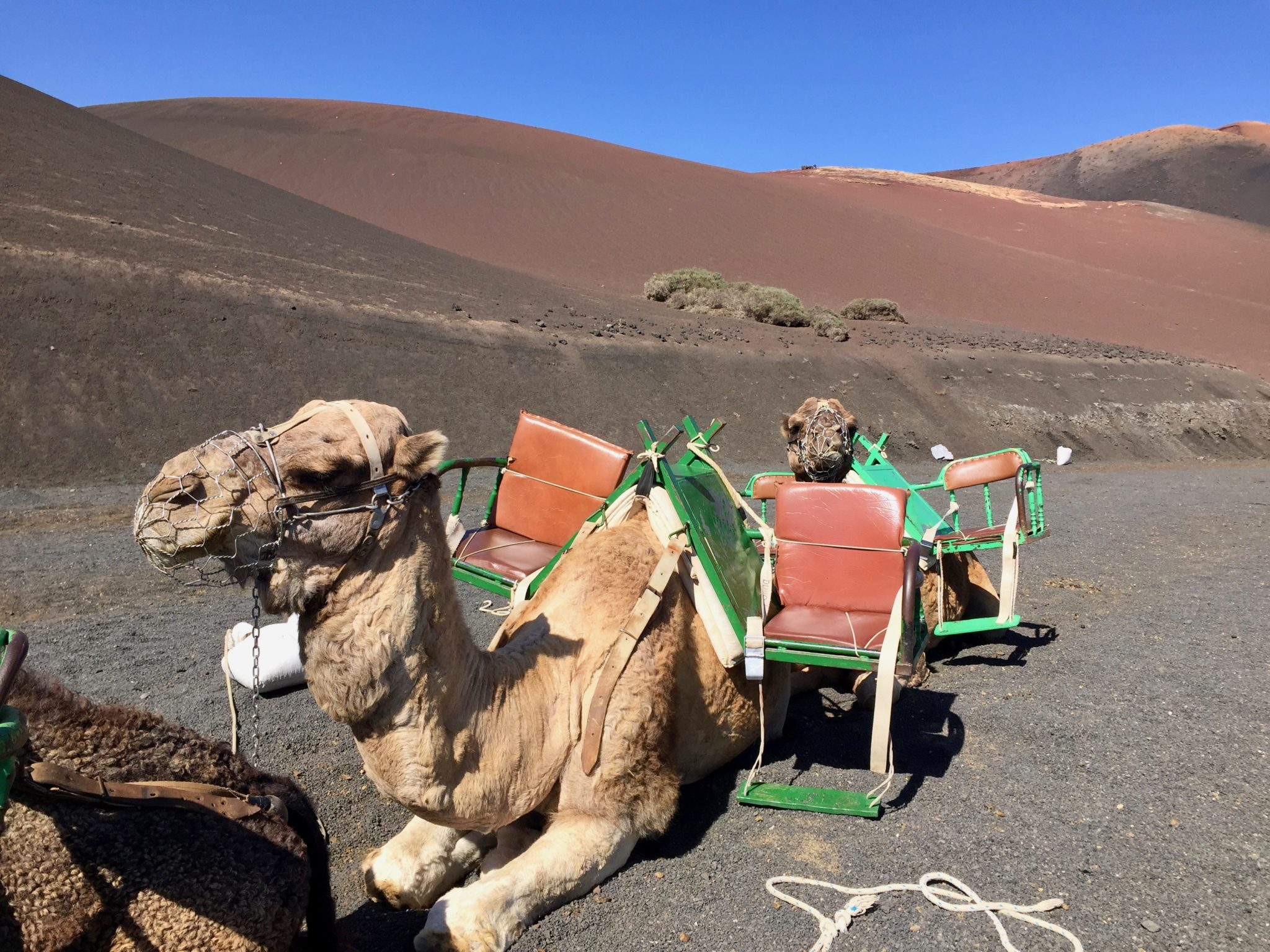 Returning to Lanzarote