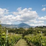 Tailor made Italian package holidays, perfect for foodies and wine lovers!