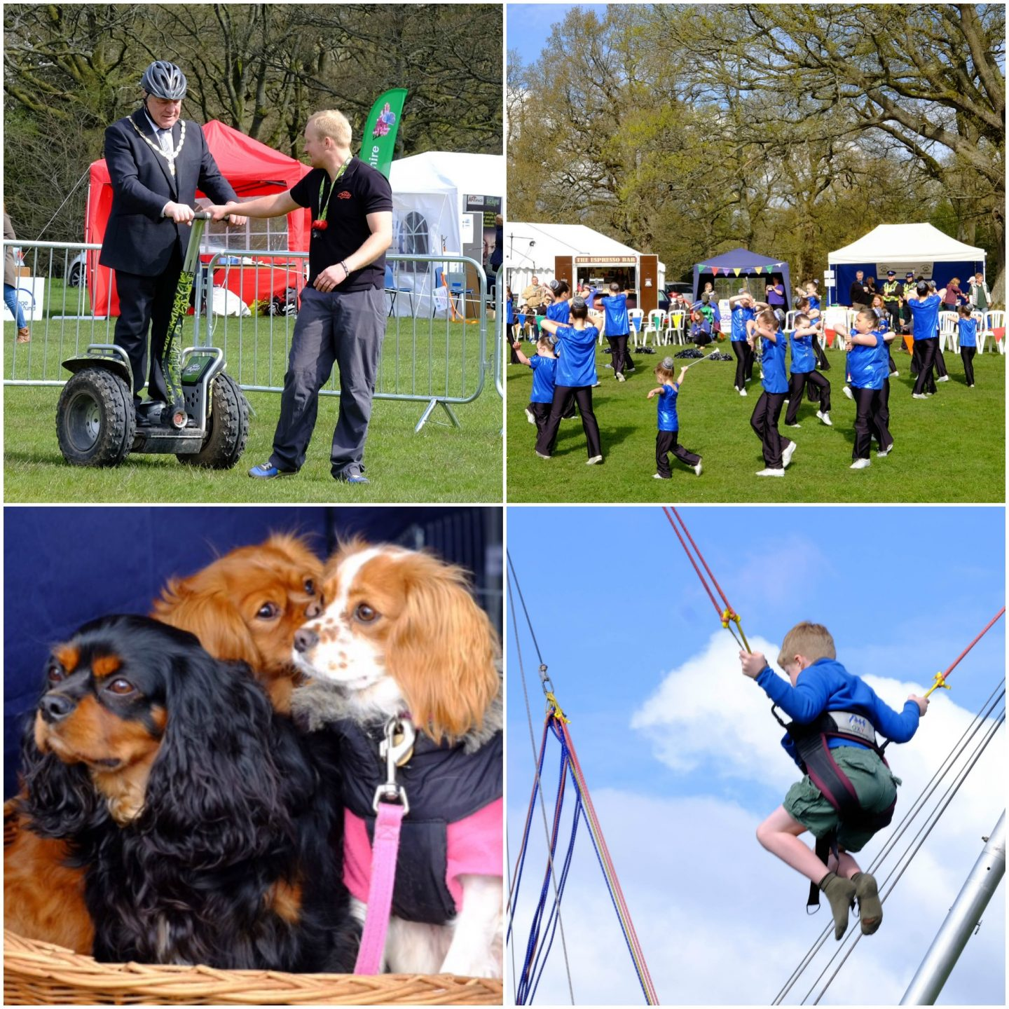 Forest Activities Festival images 2016